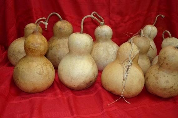 Set of 5 medium Botttle Gourds ( Dried & Cleaned)