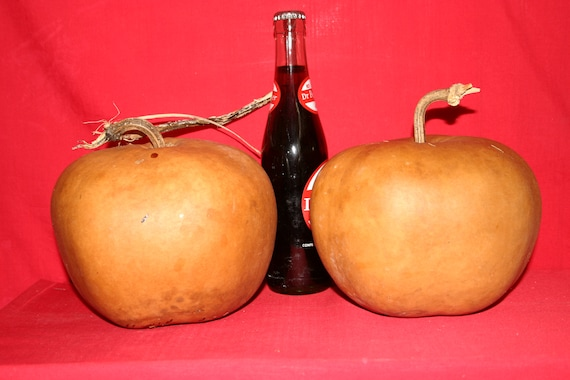 3 - Apple  Gourds ( Dried & Cleaned)