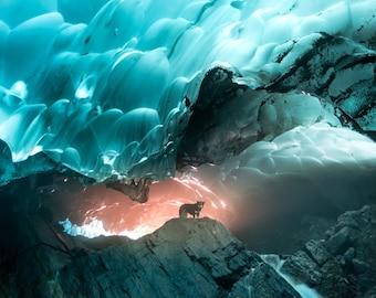 "Glacier, Dog, Dog Photo, Glacier Dog, Ice Cave,  Landscape Photography, Large Art Prints, Blue Wall Decor, ""Mendenhall Glacier Ice Caves"""