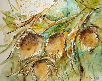 Signed Print/Teasel and Queen Annes Lace/Watercolor/8x8
