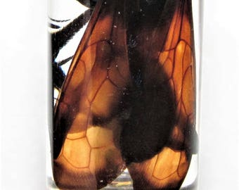 Real Arizona Pepsis Tarantula Hawk Wasp Male Preserved in Glass Vial Wet Specimen Taxidermy Entomology 2.5in vial