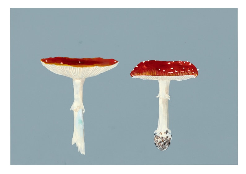 Two Toadstools fine art print by Tai Snaith. image 0