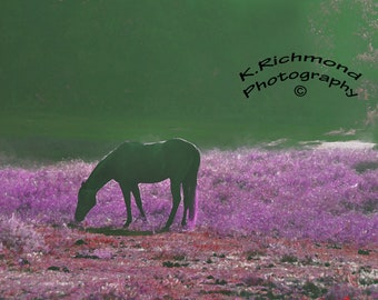 Purple Morning Mist with horse