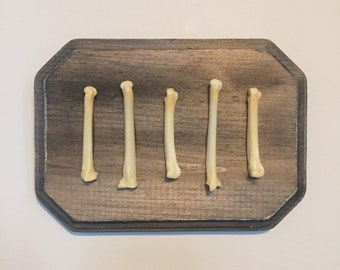 Coyote foot paw bones art