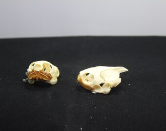 Small Pond Turtle Skull, Real Bone, Natural Material