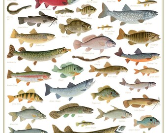 Freshwater Fish Of The Northeast Poster