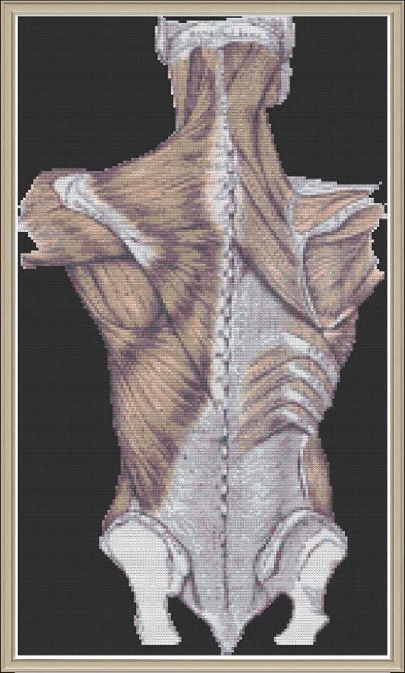 Human Back Anatomy Nerdy Cross Stitch Pattern Etsy
