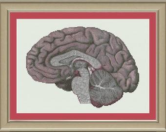 Human brain cross-section: cool anatomy cross-stitch pattern