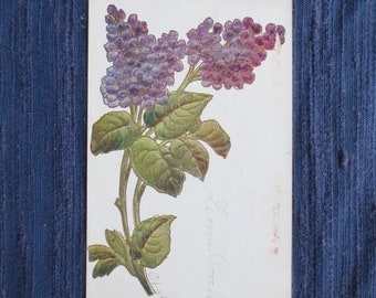 1911 Antique Embossed  Post Card with Purple Flowers