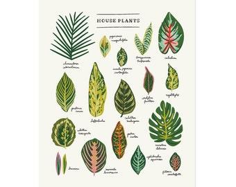 House Plants Art Print 11x14