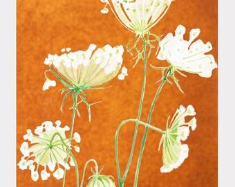 Print:  Queen Anne's Lace on Rusty Orange