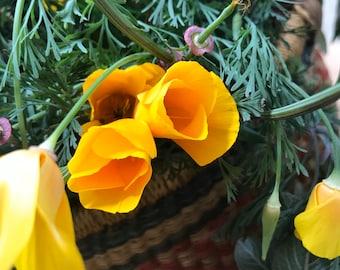 CALIFORNIA POPPY TINCTURE - Eschscholzia Californica. Organic. Whole Plant Extract.