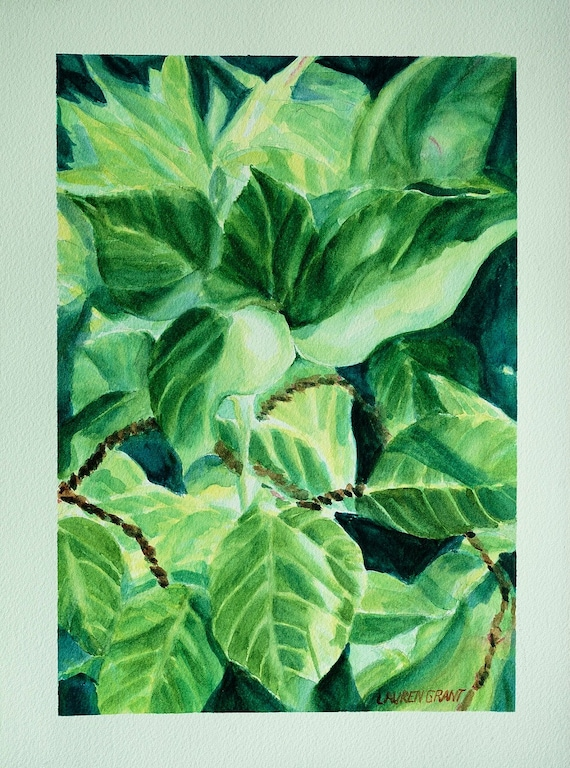 Original Watercolor Painting Of Tropical Plant Leaves Close Etsy Beginning of a dialog window, including tabbed navigation to register an account or sign in to an existing account. original watercolor painting of tropical plant leaves close up leaves 9 x 12 tropical leaves in light by lauren grant