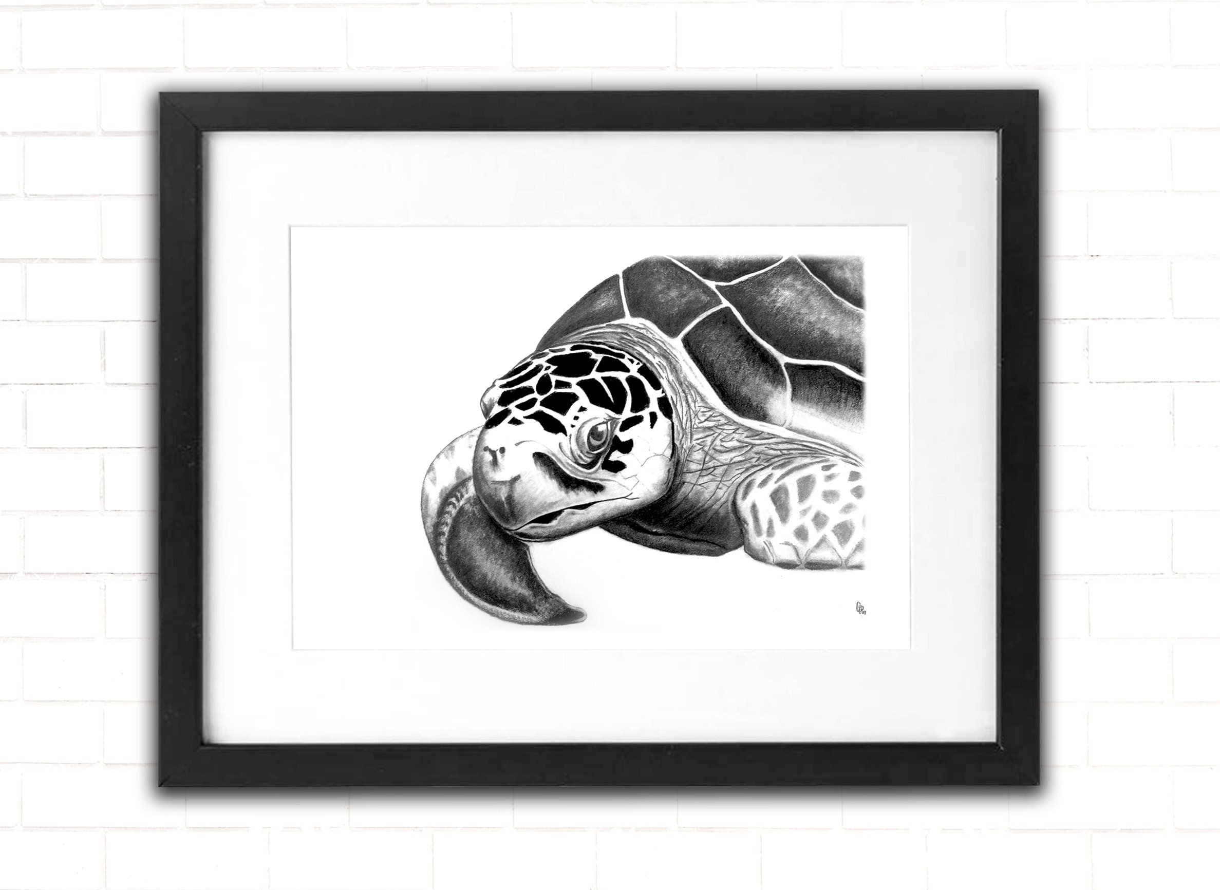Sea turtle art print sea life pencil drawing beach ocean life fine art wall decor ocean art print sketch shore art