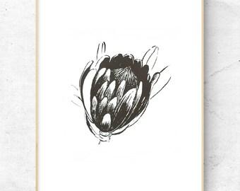 Fine Art 'PROTEA FLOWER' SILKSCREEN Print on Paper:Choose from 4 Print Colors,Free Std. Shipping Worldwide