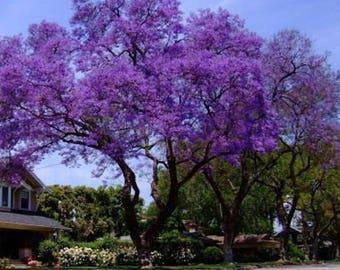 Tree Seedscom