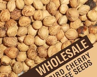 Wholesale Bird Cherry Tree Seeds, Prunus Padus