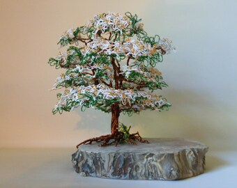 Dogwood Bonsai Etsy