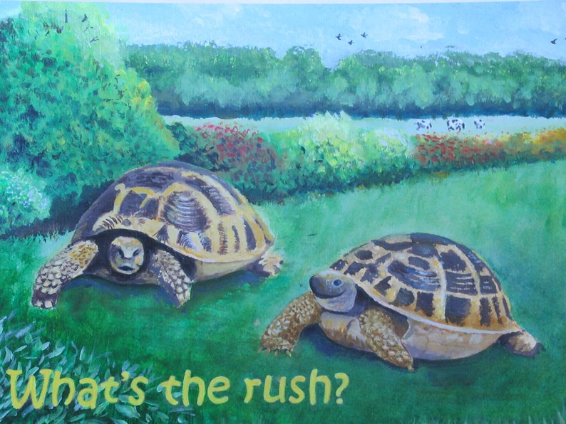 Unframed Print   A4 Print of two tortoise's  funny  image 0