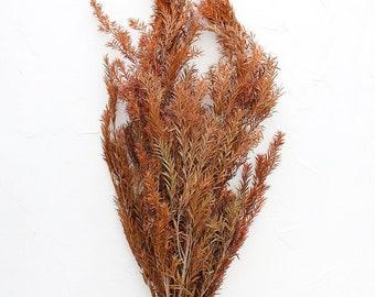 "Terracotta Preserved Melaleuca Bracteata Leaf Bundle - 20-28"" Tall"