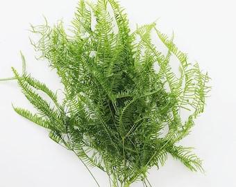 Natural Dried Fern Leaf Bundle