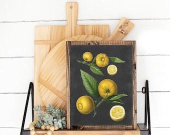 Lemon Citrus Botanical Illustration - kitchen print, many sizes, Botanicals, Vintage, Illustrations, Poster, Art, Decor, Botany Botanica
