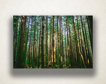 Tall Pine Tree Forest Canvas Art, Pine Trees Wall Art, Forest Canvas Print, Photograph, Canvas Print, Home Art, Wall Art Canvas