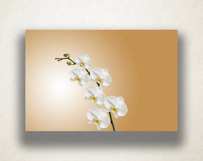 White Orchid Canvas Art, Orchid Wall Art, Flower Canvas Print, Close Up Wall Art, Photograph, Canvas Print, Home Art, Wall Art Canvas