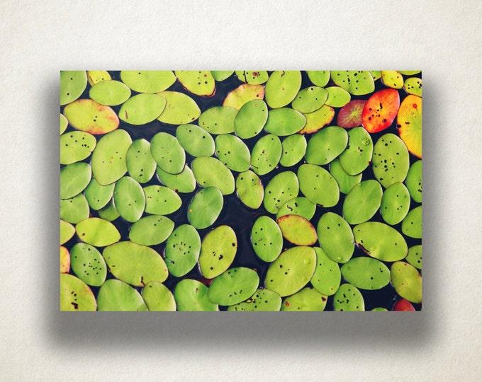 Lily Pads Canvas Art, Lily Pad Wall Art, Nature Canvas Print, Close Up Wall Art, Photograph, Canvas Print, Home Art, Wall Art Canvas