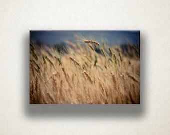 Wheat Crop Canvas Art, Farmland Wall Art, Farming Canvas Print, Wheat Close Up Wall Art, Photograph, Canvas Print, Home Art, Wall Art Canvas