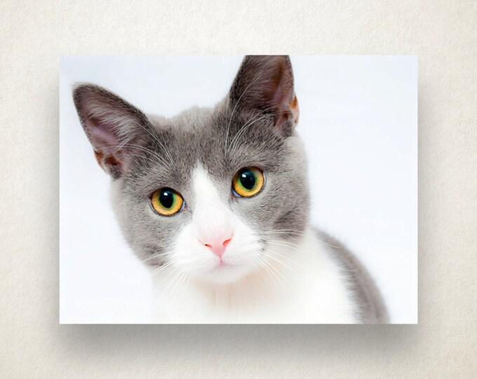 Kitten Canvas Art, Cat Wall Art, Animal Canvas Print, Kitty Wall Art, House Pet, Photograph, Canvas Print, Home Art, Wall Art Canvas