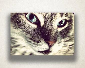 American Shorthair Cat Canvas Art, Cat Wall Art, Animal Canvas Print, Close Up Wall Art, Photograph, Canvas Print, Home Art, Wall Art Canvas