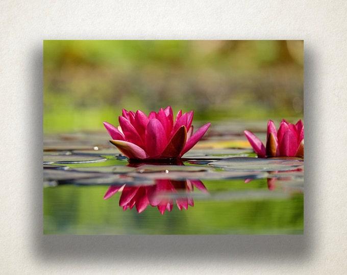 Water Lily Canvas Art, Pond Wall Art, Nature Canvas Print, Wild Flower Wall Art, Photograph, Canvas Print, Home Art, Wall Art Canvas