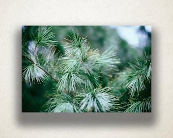 Fir Tree Canvas Art, Evergreen Tree Wall Art, Tree Canvas Print, Close Up Wall Art, Photograph, Canvas Print, Home Art, Wall Art Canvas