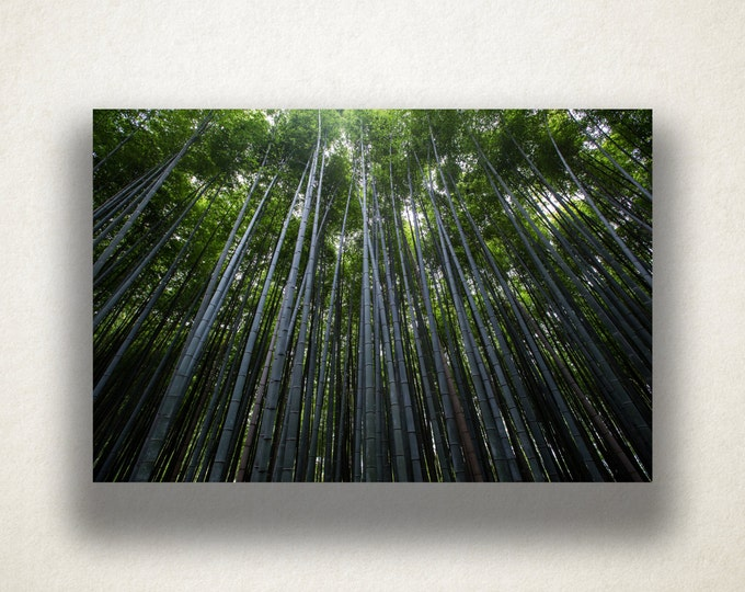 Forest Canopy Canvas Art, Tall Trees Wall Art, Trees Canvas Print, Forest Wall Art, Photograph, Canvas Print, Home Art, Wall Art Canvas