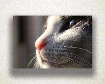 Cat Profile Canvas Art, Cat Wall Art, Animal Canvas Print, Cat Close Up Wall Art, Photograph, Canvas Print, Home Art, Wall Art Canvas