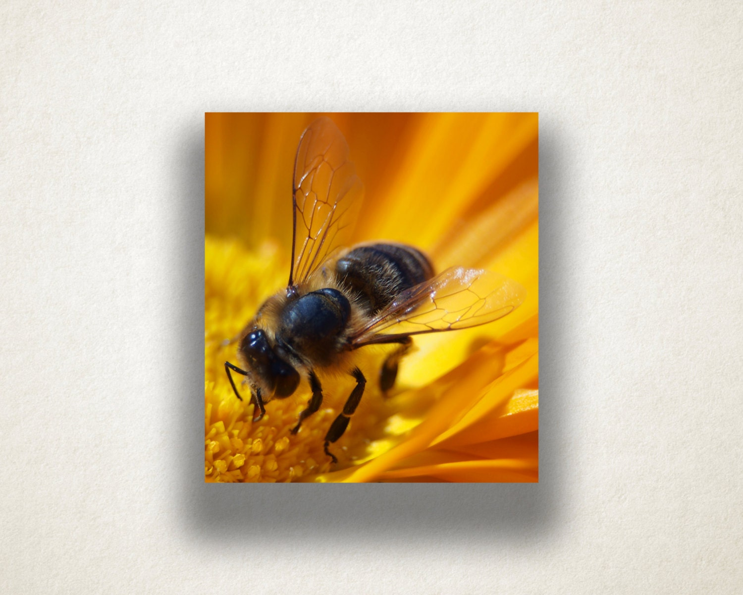 Flower and Bee Canvas Art, Bee Close Up Wall Art, Insect Canvas ...