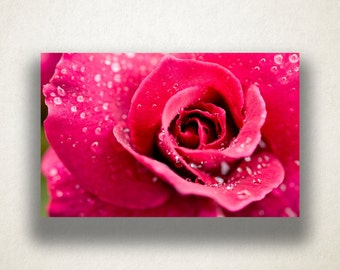 Rose Canvas Art, Pink Rose Close Up Wall Art, Floral Canvas Print, Artistic Wall Art, Photograph, Canvas Print, Home Art, Wall Art Canvas