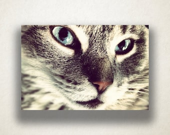 American Shorthair Cat Canvas Art, Cat Wall Art, Animal Canvas Print, Close Up Wall Art, Photograph, Canvas Print, Home Art, Wall Art Canvas