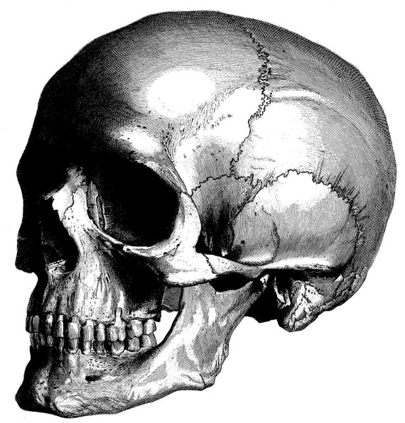 Excepcional Viejas Ilustraciones De Anatomía Viñeta - Anatomía de ...