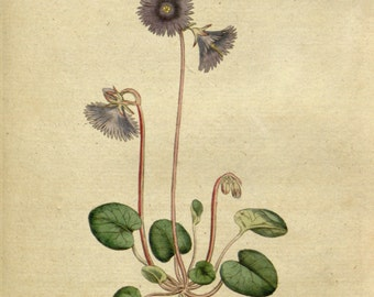 Botanical drawing, Flower print, Flower illustration, 49