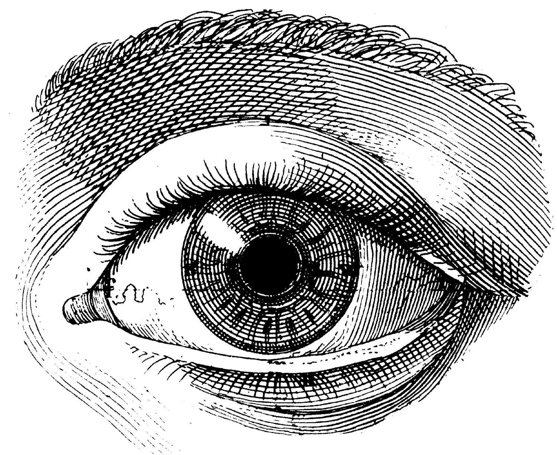 Vintage Anatomy Diagram Human Eye - Schematics Wiring Diagrams •