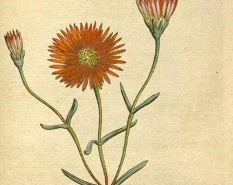 Botanic illustration, Print set botanical, Botanical poster, 59