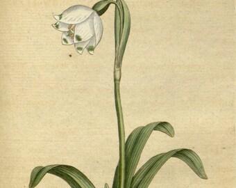 Botanic illustration, Print set botanical, Botanical poster, 46