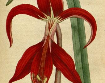 Botanical poster, Botanic illustration, Print set botanical, 47