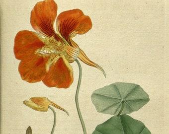 Art print botanical, Botanical pictures, Botanical chart, 23