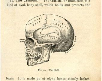 Medical, Doctor, Skull decor, Medical poster, Anatomy poster, Medical prints, Skull print, Anatomy, Anatomy print, Skull poster, 140