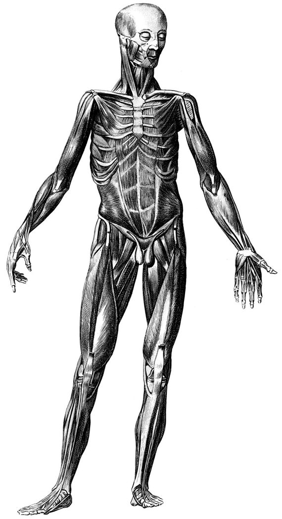 Ilustración de atlas médico viejo esqueleto anatomía humana