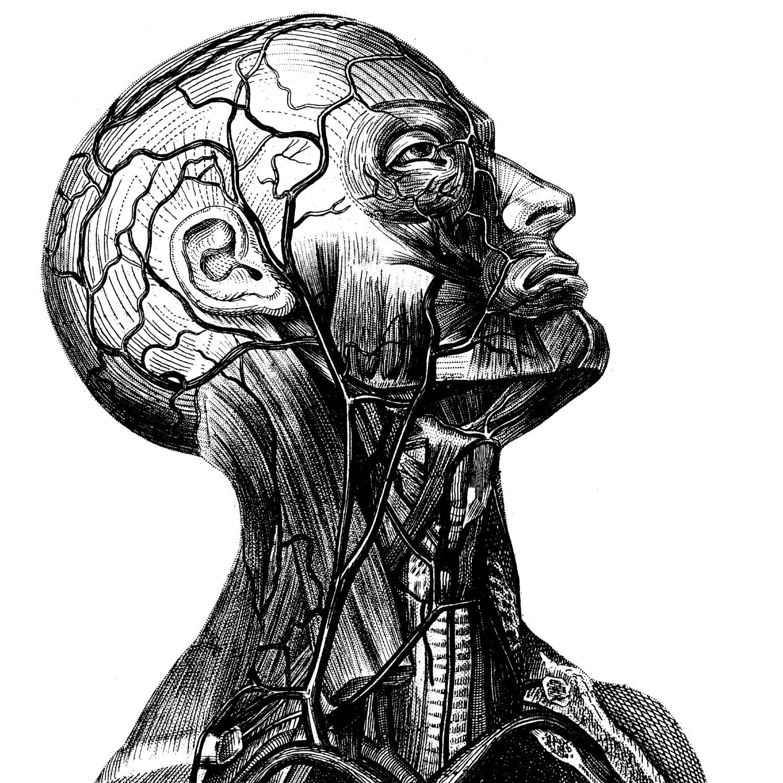 Human Anatomy Old Medical Atlas Illustration Digital Image Etsy