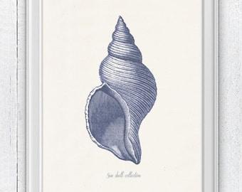 Sea shell in blue - sea life print- seashells wall art home decor -A 4 print SPS241